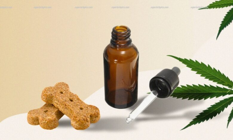 Photo of The science and technology behind CBD dog products